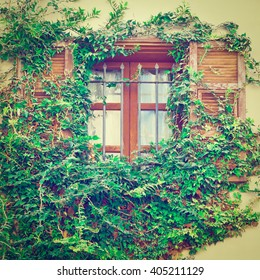 Israel Window Decorated with Plants in Tel Aviv, Instagram Effect