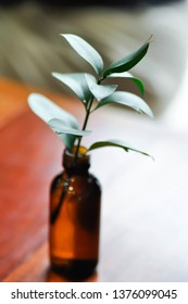 Israeli Ruscus ,sraeli Ruscus Green leaf in the vase