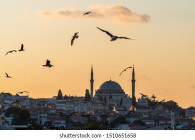 Istanbul, Istanbul/Turkey - Sept 21, 2019:  Birds Flying over Sulaymaniyah Mosque in Evening