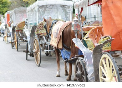 Istanbul, Turkey- Animal rights activists want to remove the horse-drawn phaeton in Istanbul Islands on the grounds that they are being persecuted. November 26, 2011.