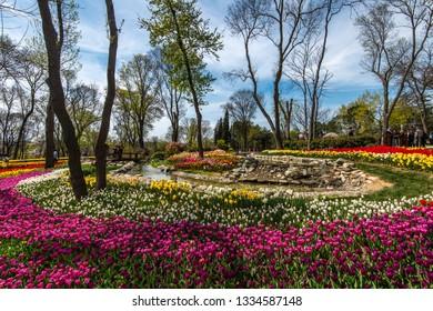 Istanbul, Turkey - April 10, 2018: Multicolored tulips on the Tulip Festival in Emirgan Park.