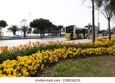 Istanbul / Turkey - April 3 ,2019 ; The yellow municipality bus stop near the station that there are passengers.the tulips in the park.