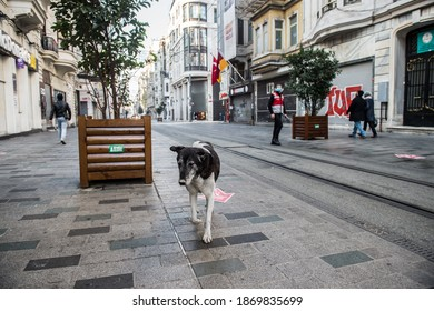 ISTANBUL, TURKEY - DECEMBER 05, 2020: Homeless dog on Istiklal Avenue on the day of curfew