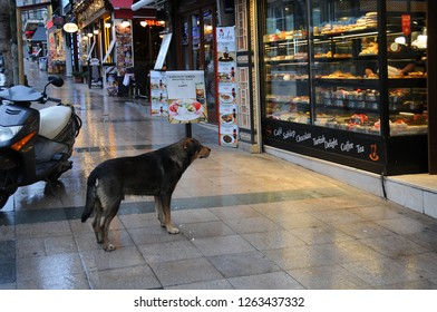 ISTANBUL, TURKEY - JANUARY 13, 2018: Stray dog waits to be fed at the coffee house door