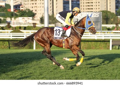 ISTANBUL, TURKEY - JUNE 25, 2017: Unidentified rider getting ready to Gazi Run in Istanbul Horce Race, Veliefendi racetrack.