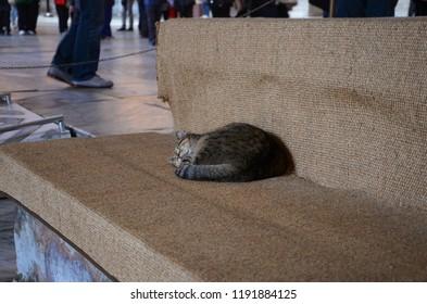 Istanbul, Turkey - March 2012: Scenic view of a Brown tabby cat sleeping inside Hagia Sophia (Ayasofya) in Istanbul, Turkey.