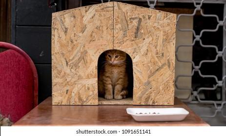 istanbul, Turkey - March 2018: Cute cat kitten sitting inside a cat house in the street