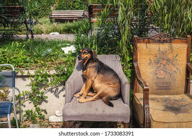 Istanbul, Turkey - October 03, 2018: City street dogs in the center of Istanbul - Shutterstock ID 1733083391