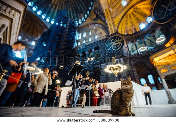Istanbul, Turkey - October 11, 2015: cat on the background of the tourists inside the Hagia Sophia museum. Soft focus and slight noise of the atmosphere for lifestyle.