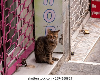 Istanbul , Turkey ; October 2019 : Close-up shot of single city cat sitting on street sidewalk