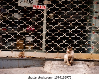 Istanbul , Turkey ; October 2019 : Single idle city cat sit in front of old closed store in Istanbul's street