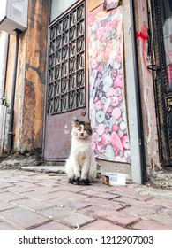 Istanbul, Turkey - October 21, 2018: Homeless cute cat sitting and waiting to be fed by the inhabitants of Balat district in Istanbul.