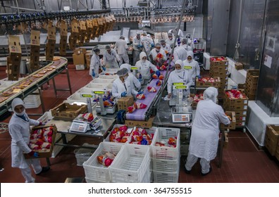 ISTANBUL, TURKEY - OCTOBER 3, 2012: Muslim woman workers working in a chicken meat plant.
