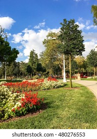 ISTANBUL, TURKEY - SEP 2, 2016: Goztepe 60th Year Park in Kadikoy, Istanbul. The park is the largest park around Bagdat Avenue and consist of many pools and child parks, many types of trees.