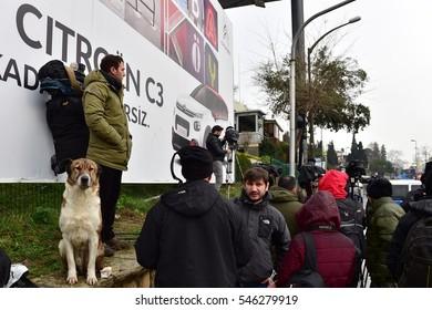 ISTANBUL,TURKEY- JANUARY 02: Stray dog and people  on January 02, 2107 in Istanbul Turkey