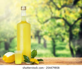 Italian alcoholic beverage, Limoncello on wooden table over lemon trees.