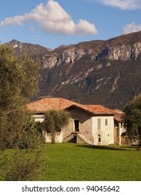 Italian cottage with Olive Trees