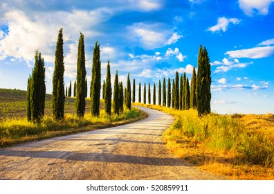 Italian cypress trees rows and a white road rural landscape. Siena, Tuscany, Italy, Europe.