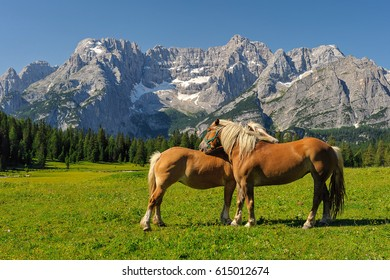 Italian Dolomites with horses - Shutterstock ID 615012674
