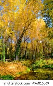 Italian foliage