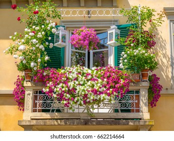 Italian house window balcony garden  decorated with a mix of many plants and flowers in colored pots Lucca Italy