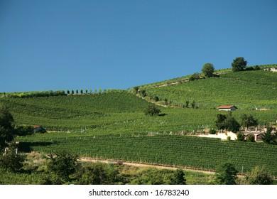 Italian landscape. Vineyards against blue sky.