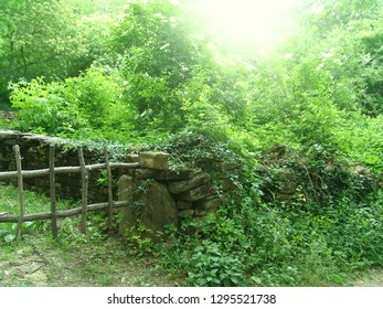 Italian rural landscape: summer green, a grunge wooden fence and a low stone wall, soft focus
