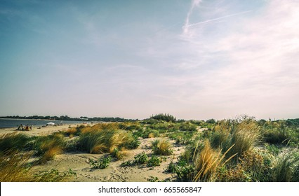 Italian sea and sand beach with dry grass and tracks in the sand, Italy.