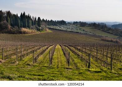 Italian vineyard in autumn