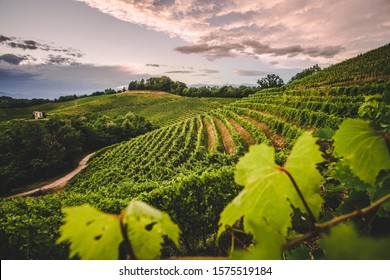 Italian vineyard and countryside at sunset, Aquila del Torre, Friuli Venezia Giulia, Udine Province. Wine farm, Italy