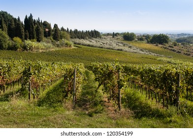 Italian vineyard in summer