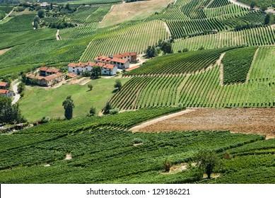 Italian vineyards