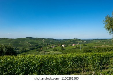 Italian vineyards in the middle of summer