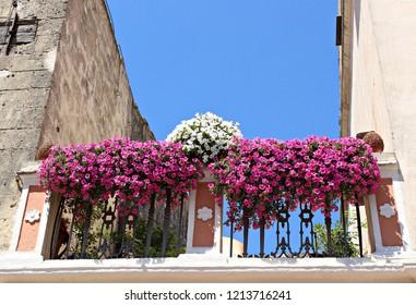 Italy, Basilicata, Matera: Flowered balcony.