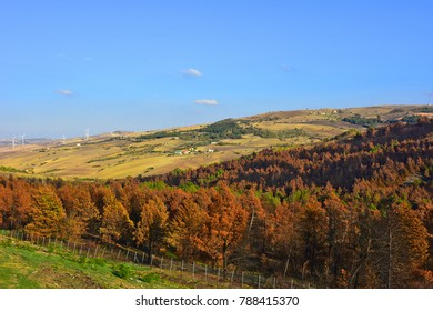 Italy, Basilicata region. Hilly area of the Apennine mountains. Country houses and crops.