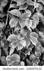 Italy, countryside, autumn dry leaves in a garden
