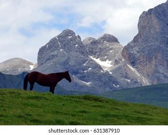 Italy, Dolomites, Ortisei, Siusi Alps, pasture horses
