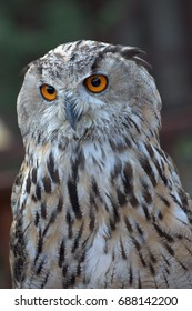 Italy July 2017 - Real owl