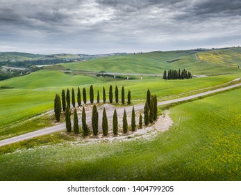 Italy, May 2019 - aerial view of the beautiful hills of the Val d'Orcia in Tuscany with the cypress grove in the shape of a circle. The hills are cultivated with wheat and take on sinuous shapes