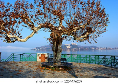 Italy, Piemonte: Old tree on the Maggiore lake in Arona.