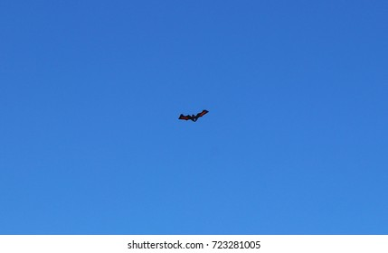 Italy, Salento: Kite in the sky.