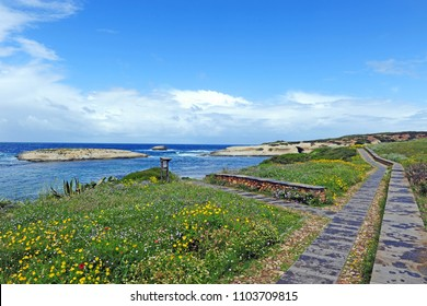 Italy - Sardinia ( Sardegna ) - Oristano - S'Archittu , cliff on the sea with cave and path full of yellow flowers during the summer
