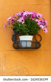 Italy, Sicily, Trapani Province, Erice. A pot of African Daisy flowers on wall in the ancient hill town of Erice.