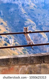 Italy, Southern Italy, Region of Basilicata. Small kitten hanging from a hand railing.