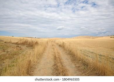 Italy / Tuscany - August 2020: Tuscany landscape, the countryside of Maremma, Saturnia