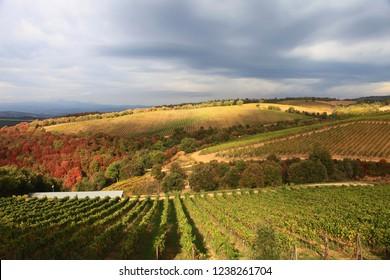 Italy, Tuscany, Campagnatico village.