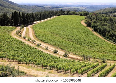 Italy, Tuscany, Chainti Vine Region, June 17th. 2019 - Vineyards landscape, cypres along the road