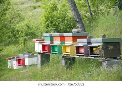 Italy, Tuscany, Emilia Romagna region, Bologna,Appennino mountain,bee honey.