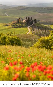 Italy, Tuscany, San Quirico d'Orcia - April, 20, 2019. Poppy flower field in beautiful landscape scenery of Tuscany in Italy, Podere Belvedere