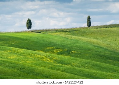 Italy, Tuscany, San Quirico d'Orcia - April, 20, 2019. Cypress trees, fields and meadows in typical Tuscany countryside. Texture of the fields.